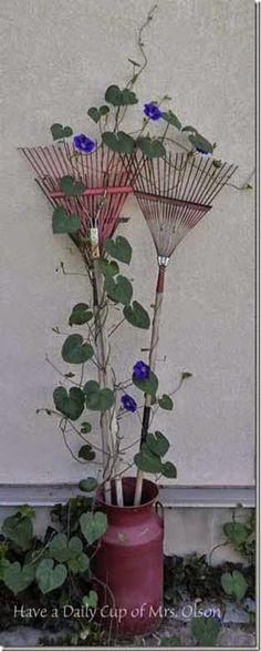 Morning Glories growing on vintage rakes (Ingredients In A Jar Models)