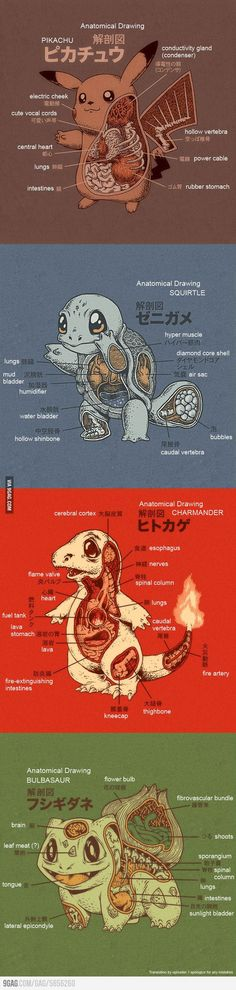 Pokemon Anatomy (English translation) - 9GAG