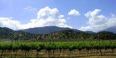 Noch reichen die reben bis zu den ersten Hügeln, doch bald werden auch diese Flächen bei Tres Palacios bepflanzt sein. www.cwc.de