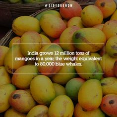‪#‎DidYouKnow‬- The ‪#‎mango‬ season is almost here! Share this fact about the king of all fruits with every mango lover you know