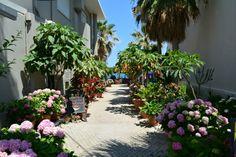 Crete Agia Marina - most beautiful restaurant