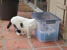 cat leaking clear fluid