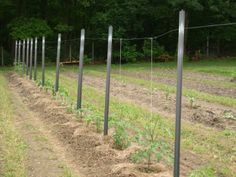 Trellises - Pin it :-) Follow us :-)) zGardensupply.com is your Garden Supply Gallery ;) CLICK IMAGE TWICE for Pricing and Info SEE A LARGER SELECTION of trellises at  http://zgardensupply.com/category/garden-supply-categories/garden-structures/trellises/ - garden, gardening, gardening gear  -Mrgarden, Fiberglass Stake, Overhead Line Trellis System for Tomato and Cucumber, String Trellis for Tomato and Cucumber « zGardenSupply