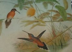 my researched image that inspired my initial designs V & A Museum, The V&a, Fashion Gallery, Ferns, Feathers, Bird, Inspired, Painting, Animals