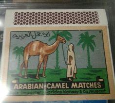 ARABIAN CAMEL MATCHES MUSCAT,OMANالعربية للالجمل المباريات مسقط، عمان