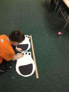 Rekenen: Meten met ijsbeerpoten. Je kunt verschillende dierenpoten hiervoor gebruiken.