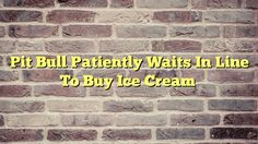 Pit Bull Patiently Waits In Line To Buy Ice Cream - http://thisissnews.com/pit-bull-patiently-waits-in-line-to-buy-ice-cream/