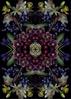 April bloom day scan mandala by Craig Cramer
