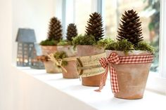Pine cones! would look great with white containers too !