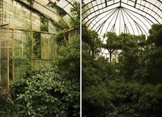 Martino Zegwaard - Abandoned greenhouse in castle.Abandoned greenhouse, Alton Towers, UK - Mark Nias-'The Alton Towers site opened in 1860 in Staffordshire with flower shows and garden tours until a theme park was built on the site in 1980.'
