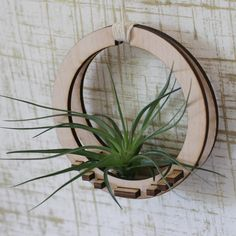Above is a air plant holder . It is laser cut from wood and comes for Tamale Grande Design . Laser Cnc, Laser Cut Wood, Laser Cutting, Laser Cutter Projects, Cnc Projects, Woodworking Projects, Woodworking Shop, Air Plants, Indoor Plants