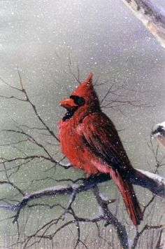 The Inspiration of Painting #8821 CARDINAL acrylic art instructional dvd hosted by Master Artist Jerry Yarnell