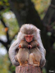 New ideas baby animals monkey pets The Animals, Cute Baby Animals, Funny Animals, Monkeys Animals, Primates, Mammals, Beautiful Creatures, Animals Beautiful, Amor Animal
