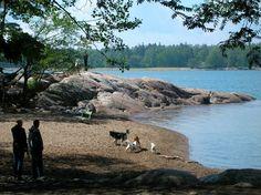 Rajasaari - Dog Island.
