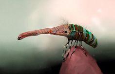 Alicia Martin Lopez - an odd creature