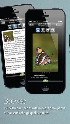 Audubon Butterflies - A Field Guide to North American Butterflies  $4.99
