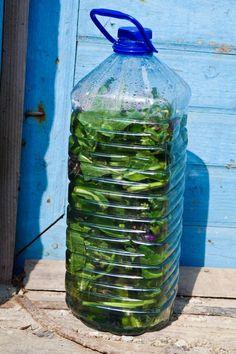 Water Bottle, Herbs, Drinks, Health, Drinking, Beverages, Health Care, Water Bottles, Herb