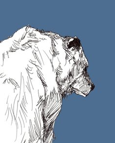 Grizzly Print by O'Reilly Ink Animal Sketches, Animal Drawings, Art Drawings, Bear Illustration, Bear Art, Wildlife Art, Chara, Art Pictures, Art Inspo