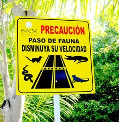 Caution sign - crocodile, snake, iguana and other animal crossing