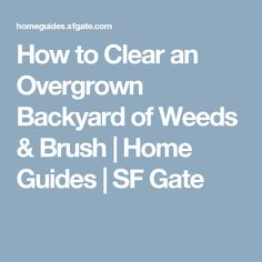 How to Clear an Overgrown Backyard of Weeds & Brush | Home Guides | SF Gate