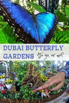 This popular Dubai tourist attraction left me with good and bad memories after my visit... But click through to find out why I will NEVER be returning, and why you shouldn't go either.