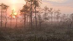 Kesäkuvat 2013 Source Of Inspiration, Painting Inspiration, Haunted Woods, Moomin, Nature Pictures, Ferns, Wilderness, Mists, Adventure Travel