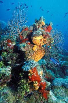 cayman islands scuba diving