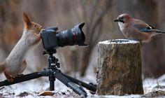 #squirrel & jaybird #eichhörnchen & eichelhäher