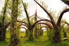 Longrun Meadows, UK
