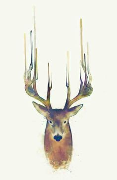 I have a thing for deer