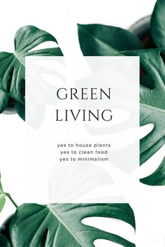 4 Green monstera stock photos by Petra Veikkola on @creativemarket