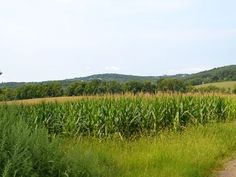 100 acres added to Hill & Dale Preserve in Tewksbury