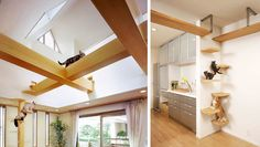 Japanese Cat-friendly House has open air cat walks - wide beams Modern Cat Furniture, Pet Furniture, Furniture Design, Ache O Gato, Cat Walkway, Cat Run, Japanese Cat, Japanese House, Cat Shelves