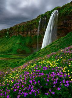 Seljalandsfoss and Flowers, Iceland