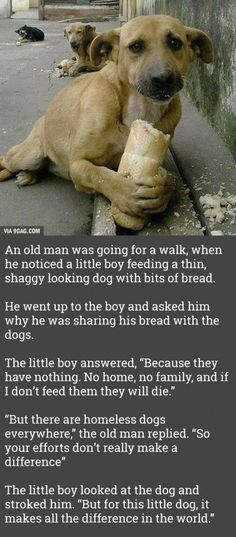 This hit me hard Please, people. Care for animals. They want to be loved, too. Animals And Pets, Baby Animals, Funny Animals, Cute Animals, Caring For Animals, Animals Tumblr, Sweet Stories, Cute Stories, Sad Dog Stories