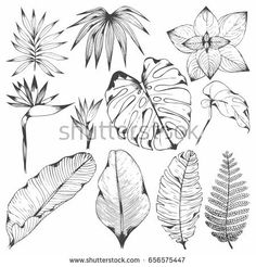 Set of vector illustrations with tropical branches. Hand drawing for design and surface design packaging and wrapping paper wallpaper covers creating patterns Leaf Drawing, Plant Drawing, Wall Drawing, Art Drawings, Flower Drawings, Drawing Wallpaper, Paper Wallpaper, Leaf Projects, Leaf Illustration