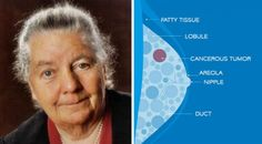 The work of Dr. Johanna Budwig should be treated with respect since she has been nominated for the Nobel Prize in Medicine six times. Dr. Budwig successfully treated 90% of her cancer patients during her career. Dr. Johanna Budwig passed away at the age of 95, in 2003. With the use of non-toxic ingredients, which […]