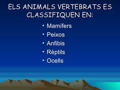 Classificació dels animals Reptiles, Animales