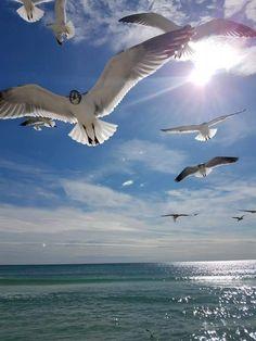 Panama City Beach Florida, Panama City Panama, Florida Beaches, Animals, Animales, Animaux, Animal, Animais
