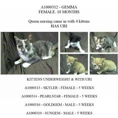 SUPER URGENT. AC&C NYC MANHATTEN CENTER. NY.