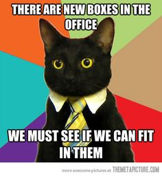 Business cat gets new supplies