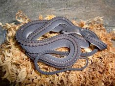 Xenodermus Dragon Snake