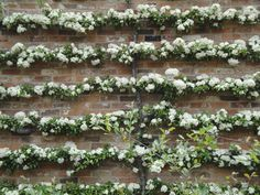A Pyracantha can be sculpted into an espalier against a sunny wall. The spring flowers are followed by bright red berries, which bring birds in for the feast, or can be used to make jelly. I got Cherri Berri.