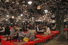 Meals under the cherry blossoms at Maruyama-koen park in Kyoto