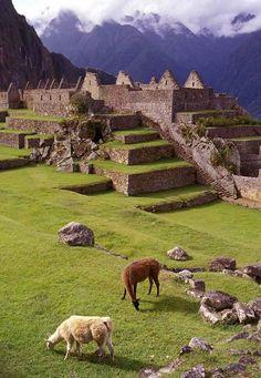 Llamas, Peru