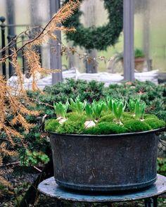 Vilken fin helg vi går till mötes. Vädrets makter rår vi inte på! Men vi hoppas kunna kicka igång dom första julkänslorna med kryddiga dofter & smaker, vackra arrangemang, växter som talar sitt eget språk & en miljö som vi tycker passar så bra till just advent ❤ Varmt välkomna till oss! Marie & Viktoria  JUL PÅ HÅKESGÅRD 19-20 NOVEMBER KL. 10-17  @trip2garden @hakesgard @lillagrona_viktoria #julpåhåkesgård #advent #hyacint #trädgård #garden #have #hage #garten #tuin #jardin #giardino…