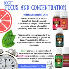 Back to School With Essential Oils--Boost Focus and Concentration Vetiver Essential Oil, Thieves Essential Oil, Essential Oil Blends, Young Living Oils, Young Living Essential Oils, Citrus Oil, Diffuser Jewelry, Copaiba, Diffuser Recipes