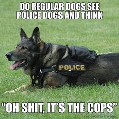 K, here are 9 carefully selected police dog memes. EnjoyK, here are 9 carefully selected police dog memes. EnjoyK, here are 9 carefully selected police dog meme Funny Dog Memes, Funny Animal Memes, Funny Animal Pictures, Cute Funny Animals, Funny Dogs, 9gag Funny, Funny Captions, Funny Facts, Cat Memes