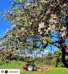 Life on a farm. #reiseliv #reisetips #reiseblogger #reiseråd  #Repost @olsmar2 (@get_repost)  Blooming on the farm  #horten #holmestrand #mittvestfold #gjengangeren #pocket_norway #flower