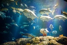 Visit the South Carolina Aquarium for a day of fish and fun!